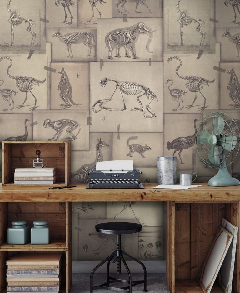Ambiente Papel pintado ZOOARCHAEOLOGY WP20236